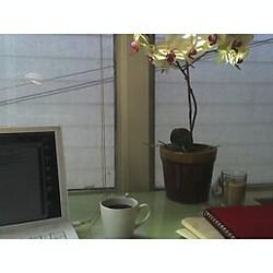 Deskwflowers